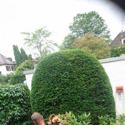 Gartenpflege München gartenpflege baumpflege andreas hecher